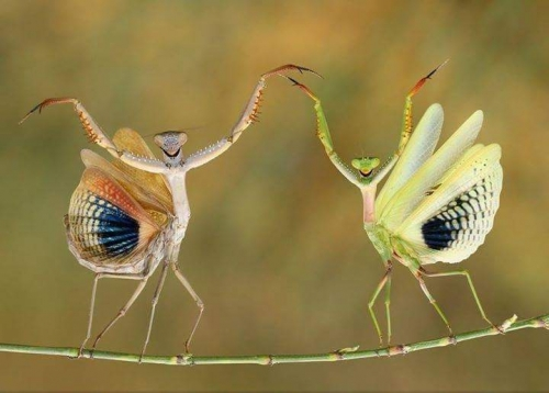 National Geographic photo of The year !.jpg