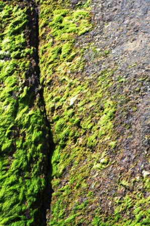 sables d'olonnes (37).jpg