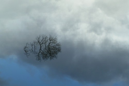paysages-brume-824693.jpg