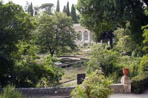 https _generationvoyage.fr_wp-content_uploads_2015_06_jardin-des-plantes-faculte-medecine-montpellier.jpg