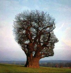 arbre_connaissance_Claude_Portais.jpg