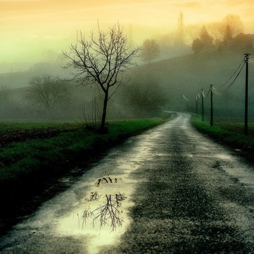 After rain by Michel Dupouy .jpg